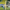 Çaykur Rizespor: 0 - Trabzonspor: 0